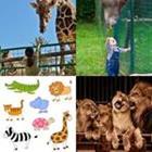 3 Lettres Niveau Zoo