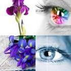 4 Lettres Niveau Iris
