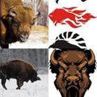 5 Lettres Niveau Bison
