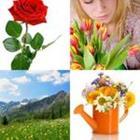5 Lettres Niveau Fleur