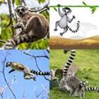 5 Lettres Niveau Lemur