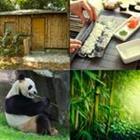 6 Lettres Niveau Bambou