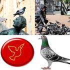 6 Lettres Niveau Pigeon