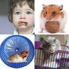 7 Lettres Niveau Hamster