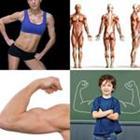 7 Lettres Niveau Muscles