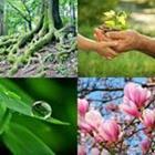 7 Lettres Niveau Plantes