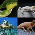 7 Lettres Niveau Reptile