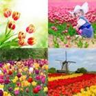 7 Lettres Niveau Tulipes