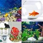 8 Lettres Niveau Aquarium