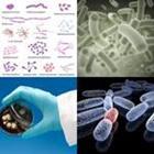 8 Lettres Niveau Bacterie