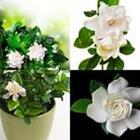 8 Lettres Niveau Gardenia
