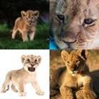 8 Lettres Niveau Lionceau