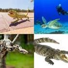 8 Lettres Niveau Reptiles