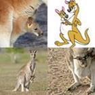 9 Lettres Niveau Marsupial